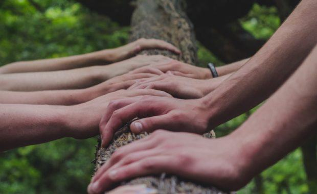 A group of people with their hands on a tree